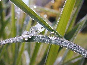 grass-dew